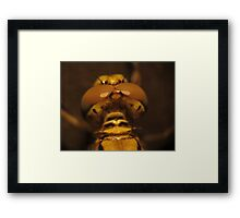 Back View Of A Dragon Fly's Head Framed Print