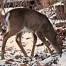 Not Yet A Yearling #2 by MotherNature