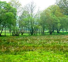French meadow by moix