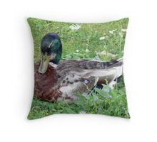 A Mallard Duck Throw Pillow