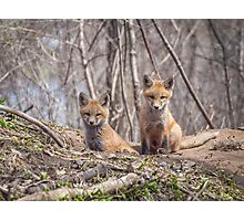 Kit Foxes 2011-1 Photographic Print