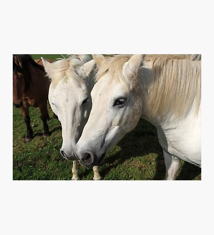 Camargue Horses Photographic Print