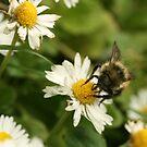 Bee by Kimberly Palmer