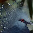 Victoria Crowned Pigeon by venny