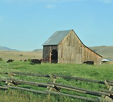 Old Barn in Oregon by jcimagery