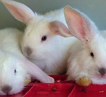 """Bunny Trio"" by Madonna McKenna"