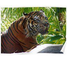 TigerBoy RIP Poster