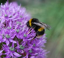 Bee-hind you! by Mike Davitt