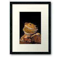 Basil Framed Print