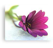 purple delight ... Canvas Print
