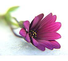 purple delight ... Photographic Print