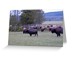 Wooly Bison Greeting Card