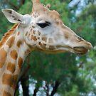 Giraffe Profile by Penny Smith