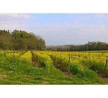 Path Through The Mustard Fields Photographic Print