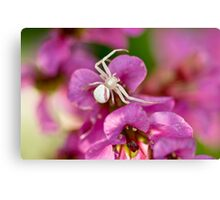 Pink and White Crab Spider Canvas Print
