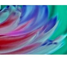Wings of Colour Photographic Print