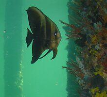 Batfish by Futurama