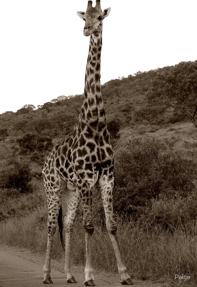 The Safari Series - 'Giraffe' by Paige