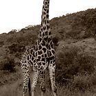 The Safari Series - 'Giraffe' by Paige