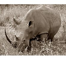The Safari Series - 'Rhino' Photographic Print