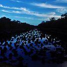 Swamp II by Digby