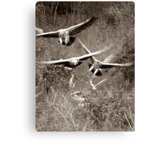 The Safari Series - 'Vultures' Canvas Print