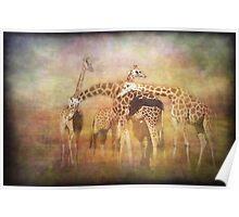 A Tangle of Giraffe Poster