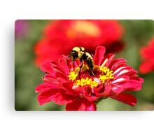Bumble Bee Gathering Nectar Canvas Print