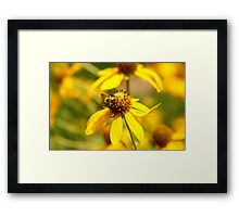 Yellow On Yellow Framed Print