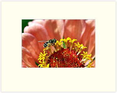 Tiny Bee on a Flower by DARRIN ALDRIDGE