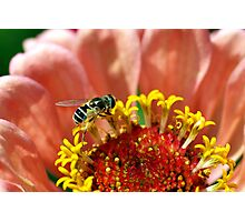 Tiny Bee on a Flower Photographic Print