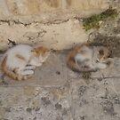 Kitty Twins by Marmadas