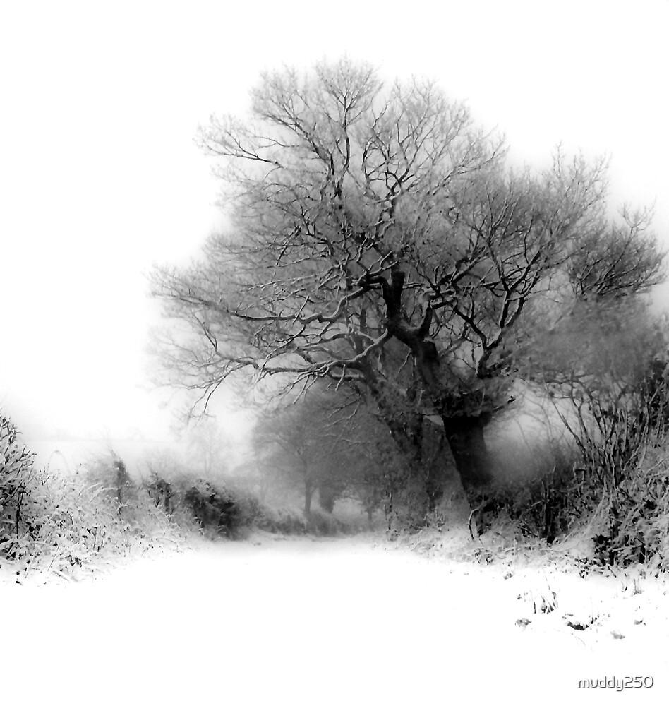 Snowy Lane by Chris Charlesworth