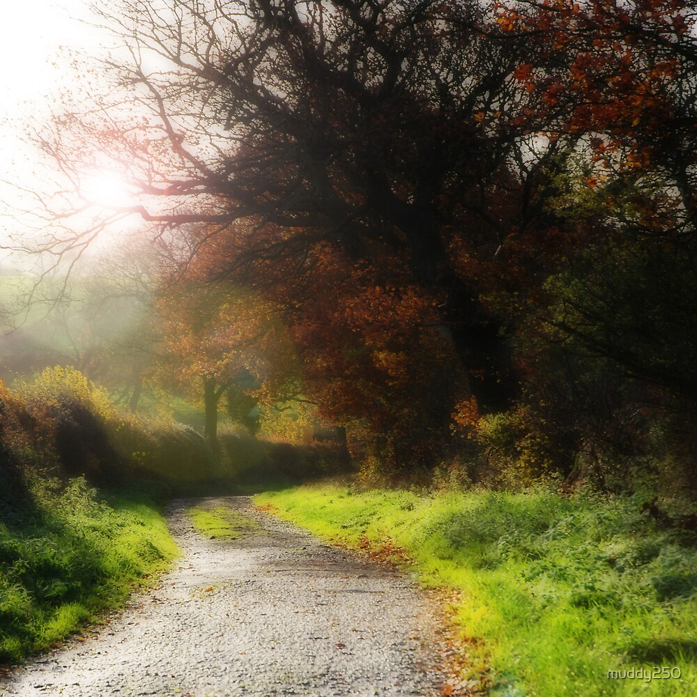 Country Lane by Chris Charlesworth
