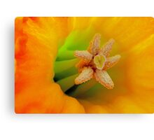 Macro Daffodil Canvas Print