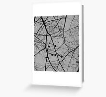 Bare Branches Silhouette Greeting Card