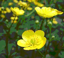 Buttercups by LittleWing21