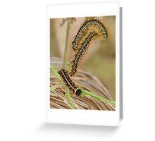 Tent Caterpillars Greeting Card