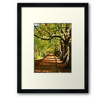 Pathway In The Woods Framed Print
