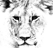 Lion Portrait by aidan  moran