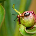 WOOD ANT  by Sandy Stewart