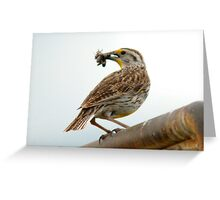 Western Meadowlark - Insectivore Greeting Card