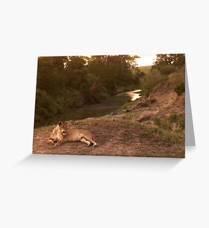 Masai Mara Greeting Card