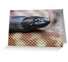 Black Headed Python - QLD form Greeting Card