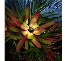 Liquify Aussie Protea Flora Photographic Print