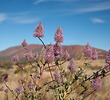 Tall Mulla Mulla, Mount Augustus by Blue Gum Pictures