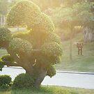 oh look it's a tree by kony
