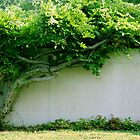 Green Vine by stormyseas