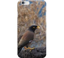 Common Myna iPhone Case/Skin