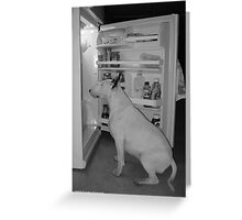 Hungry Bull Terrier Greeting Card